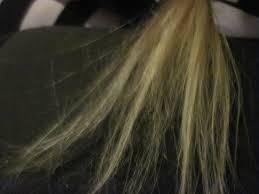 Frissigt och slitet hår