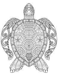 Turtle Pattern Impressive Wood Burning Turtle Pattern Pyrography Pinterest Turtle