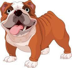 cute bulldog clipart. Delighful Bulldog English Bulldog  Standing In Front Of White Background Intended Cute Bulldog Clipart O