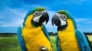 Попугаи - свободные полеты на природе! Домашние питомцы ...