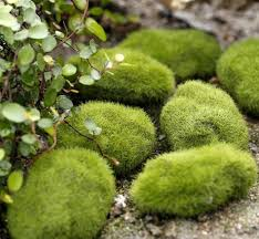 Decorative Moss Balls garden decoration Rustic Artificial Fresh Moss Balls Decorative 27