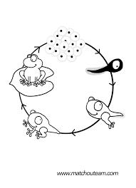Mini Livre Sur Le Cycle De Vie De La Grenouille Cycles De Vie La