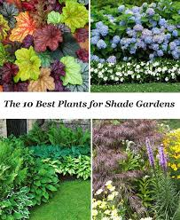 Small Picture Best 10 Best shade trees ideas on Pinterest Corner flower bed