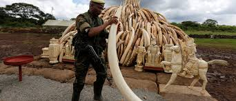 Wildlife Movement Chart Wildlife Crime A 23 Billion Trade Thats Destroying Our