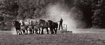 the disappearing amish