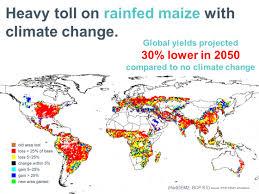 Mink Process Based Crop Modeling For Global Food Security