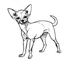 Chihuahua Help Pagina 1 Taartdecoratie Algemeen