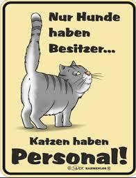 Witzige Bilder Katzen Bilder Mit Spruch Wattpad
