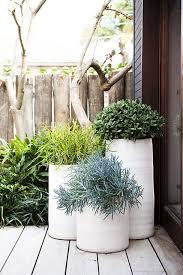 bondi pots plants outdoor planters