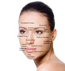 Beauty Face Map Wrinkle Map Wrinkles Aging Anti
