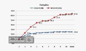 Doberman Weight Chart Dog Height Chart Doberman Transparent Cartoon Free