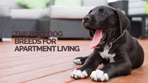 Apartment Living For Dogs