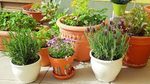 to grow flowers in pots