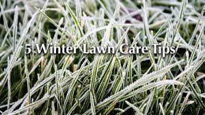 Winter Lawn Care: Is Your Grass Prepared for Spring?