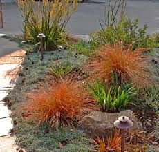 Small Picture Drought Tolerant Los Angeles Front Yard Landscape Garden