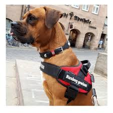 Julius K9 Power Harness Sizing Chart Julius K9 Idc Harness For Blind Guide Dogs