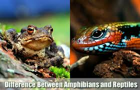 Difference Between Amphibians And Reptiles Venn Diagram Similarities Difference Between Amphibians And Reptiles