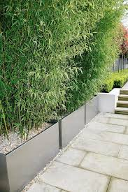 Small Picture Bamboo screening contained within planters no running