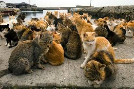 hundreds of cats. Delighful Cats Cat Islands Paradise For Tourists Hell Animals  F8153567a0106f331b60b81d8e8 To Hundreds Of Cats