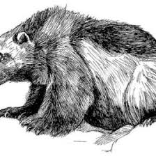 Small Picture Wolverine Animal Coloring Pages Wolverine Coloring Pages To