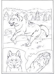 Wolf In De Sneeuw Kleurplaten Dierentuin