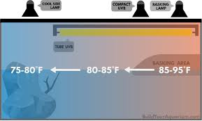 Uvb And Basking Light Turtle Lighting How To Set Up The Perfect Light System For