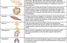 Human Body Systems Chart 6 Organ System Of Human Body And Their Functions Human