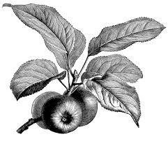 Botanical Archives Page 4 Of 5 Old Design Shop Blog