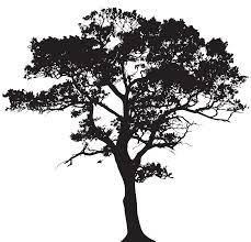 Black And White Tree Clipart Transparent Background
