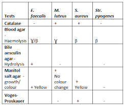Enterobacteriaceae Biochemical Reactions Chart Identification Of Gram Negative Bacteria Using Biochemical