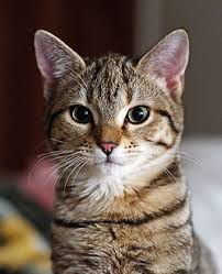 cat. Unique Cat Irishedit Cat Intended
