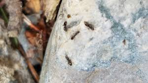 Sugar Ant Control Exterminatorswhy Ants Invade Our Living Spaces