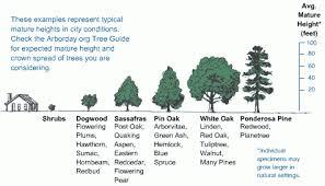 Oak Tree Size Chart 29 High Quality Oak Tree Size Chart