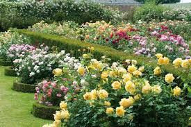 Small Picture 12 Tips for Designing Beautiful Rose Beds HGTV