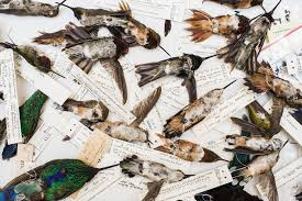 Inside the Strange World of Dried Hummingbird <b>Love Charm</b> ...