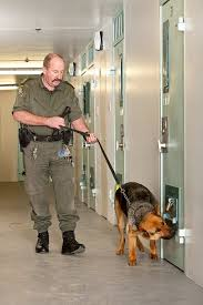 Image result for prison guard with dog