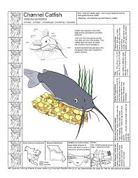 Small Picture Missouri Species Coloring Sheets