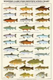 Freshwater Fish Identification Chart Western Gamefish Identification Chart Posters Fish Chart