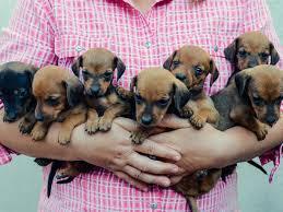 new puppy preparation