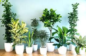 office plants no light. Indoor Office Plants No Light E