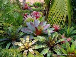 Small Picture 60 best Tropical gardens images on Pinterest Tropical plants