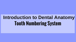 Tooth Numbering System Universal System Zsigmondy Palmer System Fdi Two Digit System