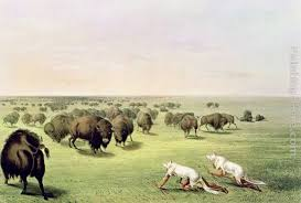 george catlin hunting buffalo camouflaged with wolf skins circa 1832