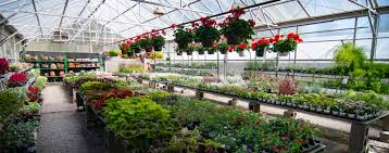 beat the heat in our shaded garden plants in containers for summer gardening garden center