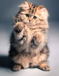 cute fluffy kittens. Brilliant Kittens Meet The Kitten That Saved My Life U003du003d Cool Article It Makes Me  Really Want To Get A Cat Help Battle My Anxiety Inside Cute Fluffy Kittens E
