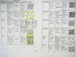 Tissue Chart Worksheet Answers Intro And Tissues Mrs Johnsons Site