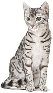 realistic cat drawing in pencil. Perfect Pencil How To Draw Cat Step By Throughout Realistic Drawing In Pencil