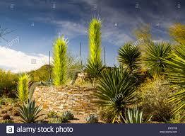entrance desert botanical gardens phoenix arizona usa