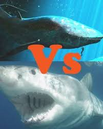 megalodon shark compared to killer whale. Brilliant Whale Whales Vs Sharks For Megalodon Shark Compared To Killer Whale I
