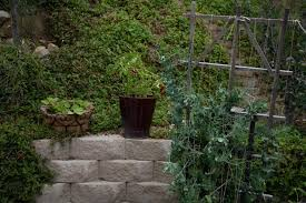 how to start your own home garden the